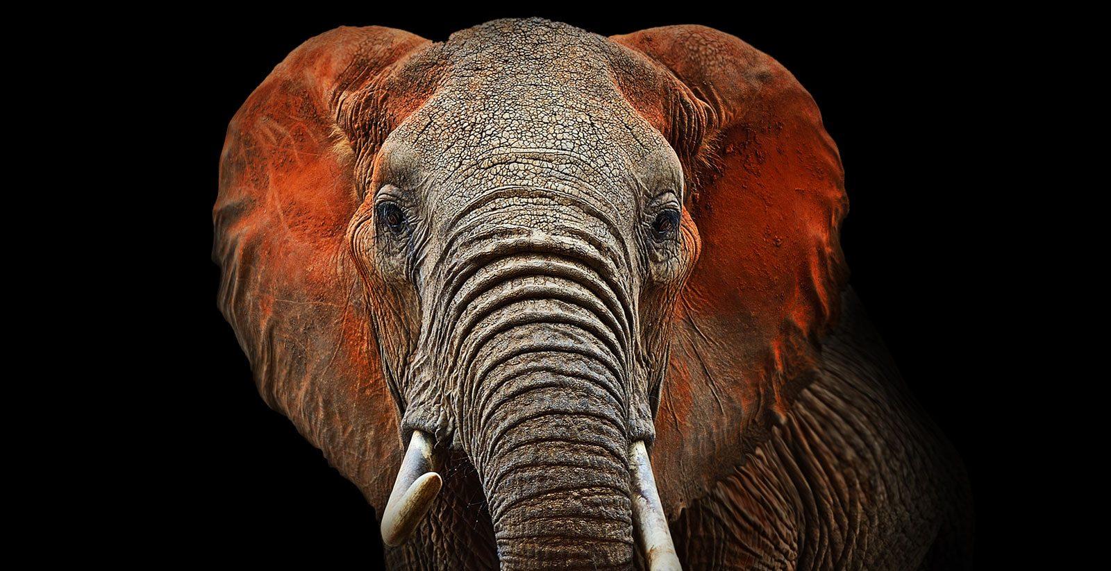 Kanzlei optitax-elefant